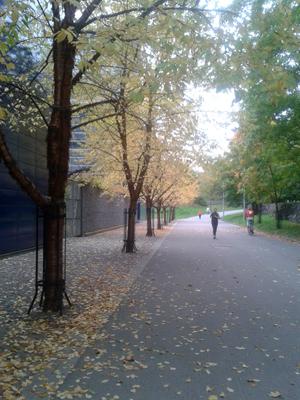 autumn_s