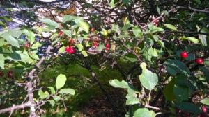 lapinlahti_berries2_s